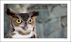 Owl by SLOShooter
