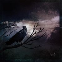 Raven's night by Silvana-Massa-Art