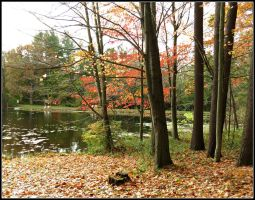 Fall at the Pinecroft by Michies-Photographyy