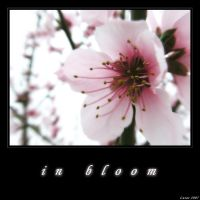 In bloom by lusas