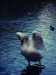Swan Lake by SarahCleary