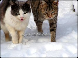 715 by evy-and-cats