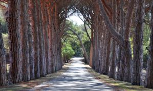 tree lined by Lianne-Issa