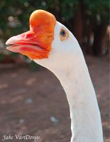 Goose by SublimeBudd