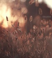 I'll build you a fire by sumarlegur