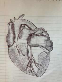 anatomical heart by moonlightluver44