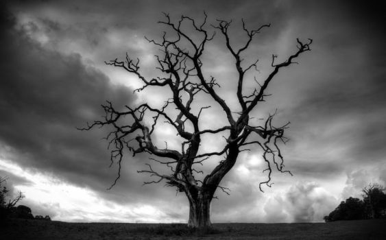 Crooked Lament by Lianne-Issa