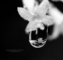 Morning drop 7 by farcry77