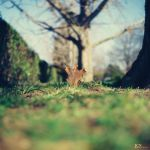The Leaf V by JCNProductions