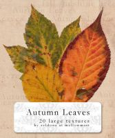 Autumn Leaves by mellowmint