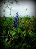 Bluebonnet Industry Texas by spidermonkeykiss