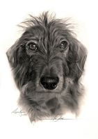 Wire haired Dachshund - 'Miss Happy' by Captured-In-Pencil