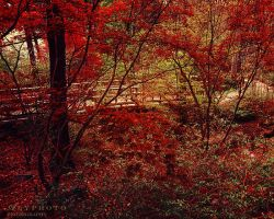 The Red Forest by Alyphoto