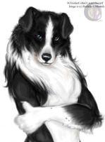 SCBorderCollie - Colored by lenzamoon