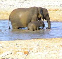Elephant and Young II by Jenvanw