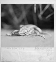 Lizard II by snarto