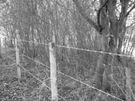 Fence and Trees by playfielder