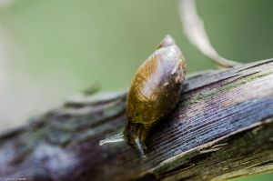The Snail and the Vine 3 by SabrinaFranek