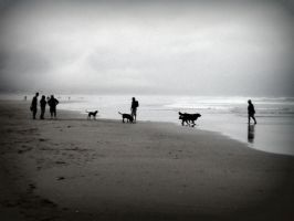 a day for the dogs by RiparianVeins
