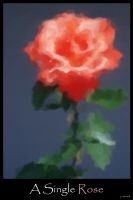 A Single Rose by jcorradi2002