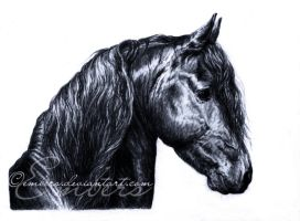 Friesian by Embers