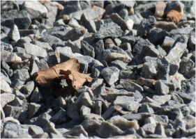 Dried leaf and gravel 1 by Kattvinge