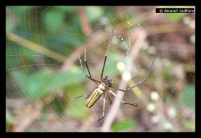 Spider Macro 03 by Knightmare-at-9