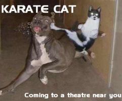 Karate Cat by OneTrueSonicMaster