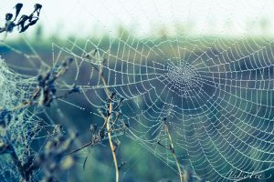 SpiderWeb by Lili66Laeti
