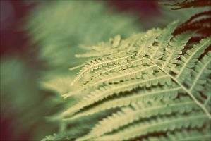 Pteridophyte by kailay