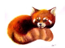 Red Panda by LychiCambess
