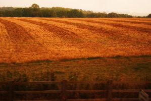 strips of crop by loobyloukitty