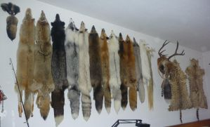 Wall by Tricksters-Taxidermy