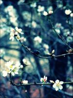 Magic of Spring 9 by Lenna3