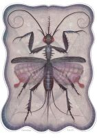 Entomology Tab. IV by V-L-A-D-I-M-I-R