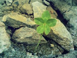 five-leaf clover by Mandy0x