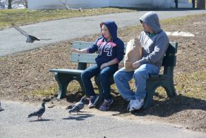 Pigeon Feeding, the Take Off by Miss-Tbones