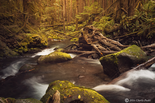 Alluring Woodland by CharlieA-Photos