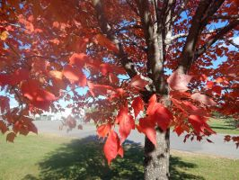 fall color6 by kingbob24