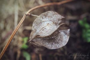 Rotten Plant by Estelle-Photographie