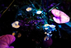 Neon Forest by emphases