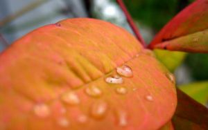 Droplets on a Soft Leaf by Solitude12