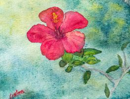 Hibiscus by cristineny