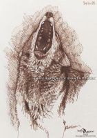 Howling red wolf sketch by makangeni