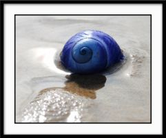 sea shell by ben5069