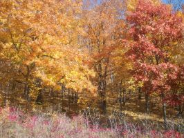 Fall Trees 2 by QueenAliceOfAwesome
