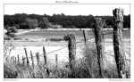 Wire and Wood Fence bw by yellowcaseartist