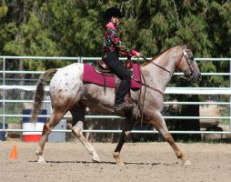Horse Show Stock 010 by Notorious-Stock
