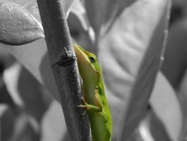 Anole on Branch by livdrummer