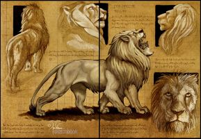 Lion Sketches by churro818